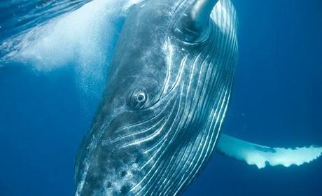 Fotografías tamaño ballena