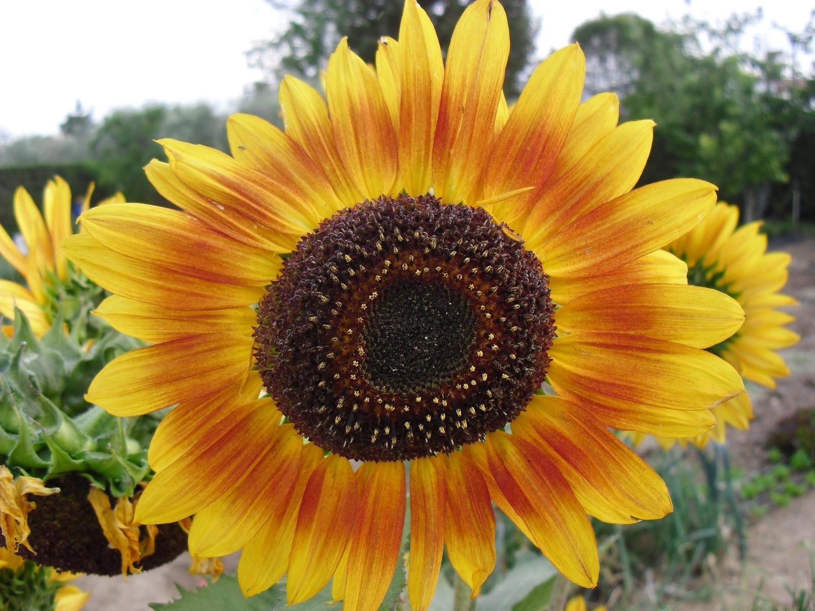 Las flores de mi huerto cap 1 paperblog for Las plantas ornamentales y sus nombres