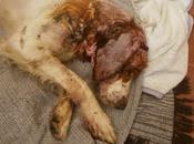 Coronado, barbarie maltrato animal. (málaga)