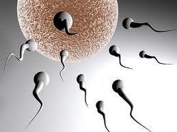 La dieta puede influir en la fertilidad de una persona