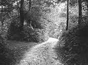 camino… camino