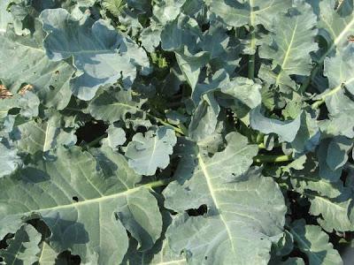 Plantas ornamentales comestibles paperblog for Diseno de plantas ornamentales