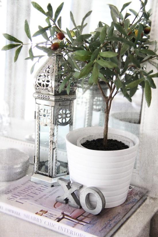 Un olivo en decoracion paperblog - Arboles de interior ...