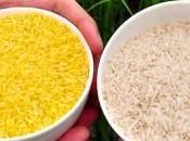 arroz modificado genéticamente buena fuente vitamina