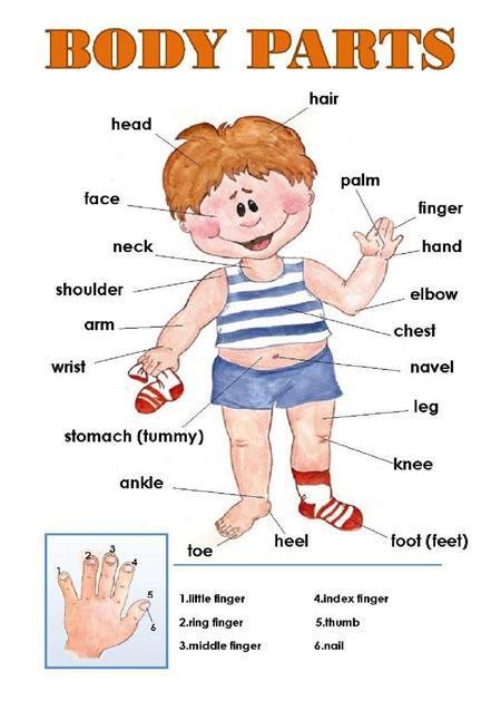 Las partes del cuerpo en inglés - Paperblog