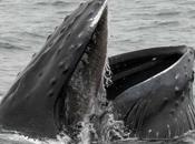 increíbles acrobacias bajo agua mayor depredador mundo