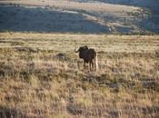 Sudáfrica: Mountain Zebra