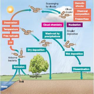 Nublado con posibilidad de microbios