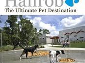 nueve residencias caninas caras mundo