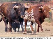 concha sierra desaparecen paisaje campero español