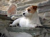carácter Jack Russell Terrier