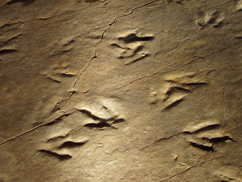 Las huellas de los dinosaurios