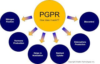 pgpr thesis