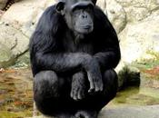 primate decepcionado