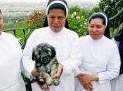 ´Perla´ queda vivir monjas