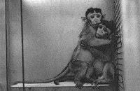 especie inhumana