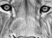 Dibujo león terminado Drawing lion finished