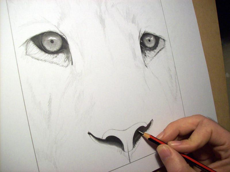 Dibujo De Le 243 N Terminado Drawing Of Lion Finished