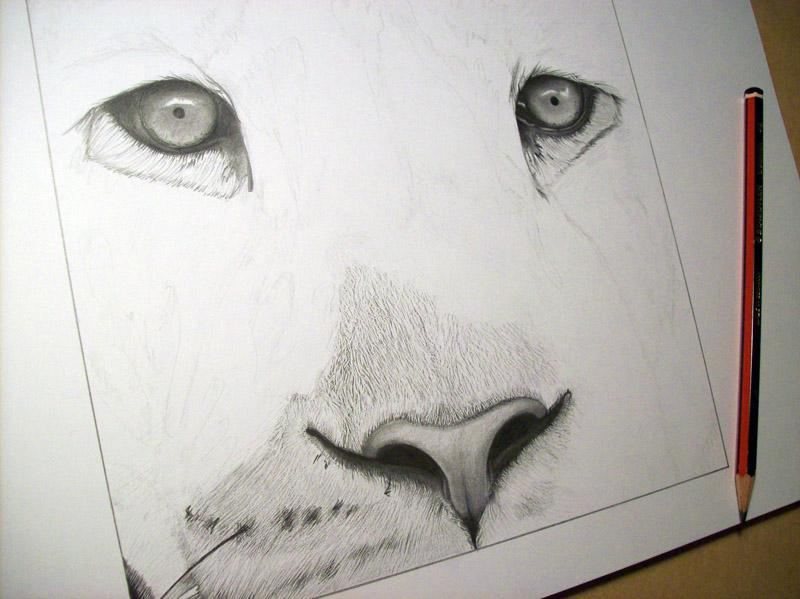 What Is Voodoo >> Dibujo de león terminado / Drawing of lion finished ...