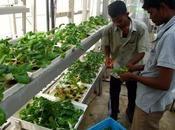 Agricultura vertical singapur