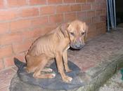 Cachorra muerta vida. urgente asociación recoja. pueblo sevilla