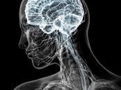 Sabias cerebro organiza conceptos manera continua CURIOSIDADES