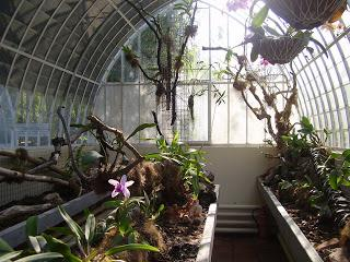 Jard n bot nico de valencia paperblog - Jardin botanico valencia ...