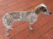 Manchitas, cachorra meses pueblo Huelva.