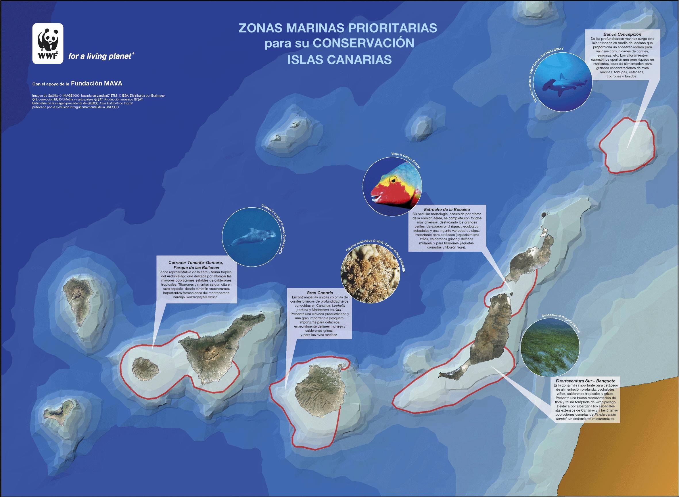 amp canarias copia 2 Reservas marinas de las Islas Canarias