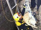 bomberos rescatan perra atrapada muelle Taliarte