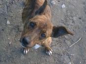 Cachorra esquelética cabeza doblada calle. (Huelva)