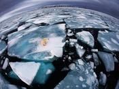 """imágenes 2012 según """"Nature"""""""