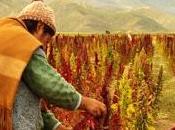 Bolivia busca mercados para quinua Asia