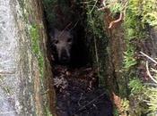 Perro perdido encontrado tras horas grieta gracias Internet