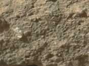 fotografíado vida Curiosity Marte?