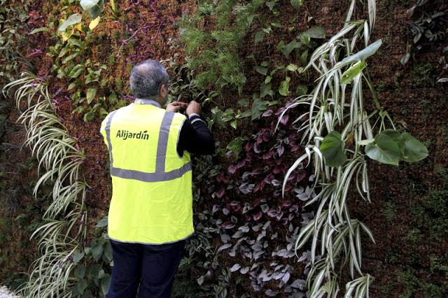 Mantenimiento de jardines verticales paperblog for Trabajo de mantenimiento de jardines