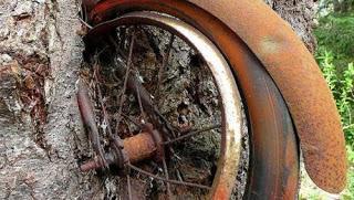 Árbol traga Bicicletas en Estados Unidos