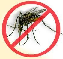 Tratamientos naturales para el dengue