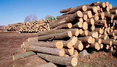 Madera para carpinteria