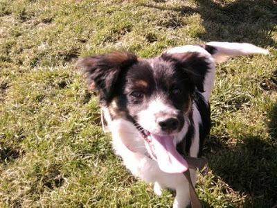 Historias de perros - Perritos en adopción