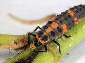 Animales insectos beneficiosos para jardín