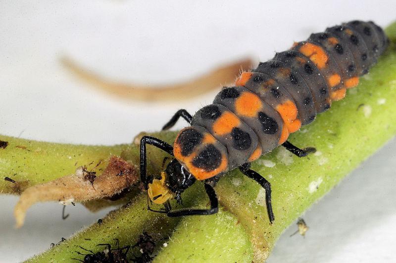 Animales e insectos beneficiosos para el jard n paperblog for Insectos del jardin