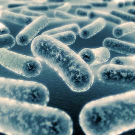 Bacterias para depuradoras paperblog for Depuradora aguas residuales