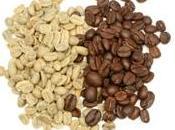 grano café verde bueno para usted?