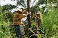 Congreso de EE.UU. envía carta al Presidente colombiano pidiendo protección para líderes de restitución de tierras.