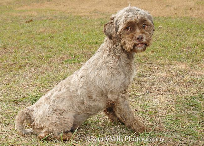 El perro con cara humana