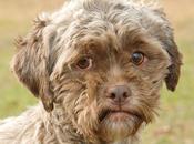 Tonik, perro cara inquietantemente humana