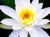 Psicología Budista