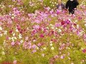 parque flores