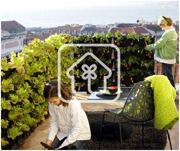 como conseguir un pequeño huerto en casa o un minijardin en el interior